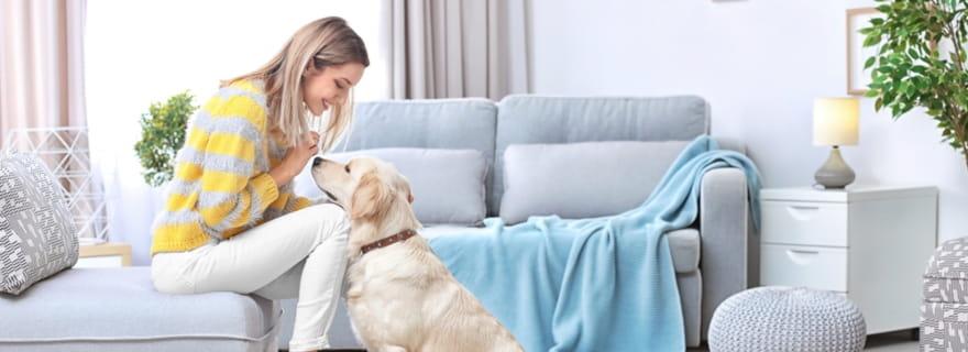 ¿Cubre el seguro de hogar los daños ocasionados por mi mascota?