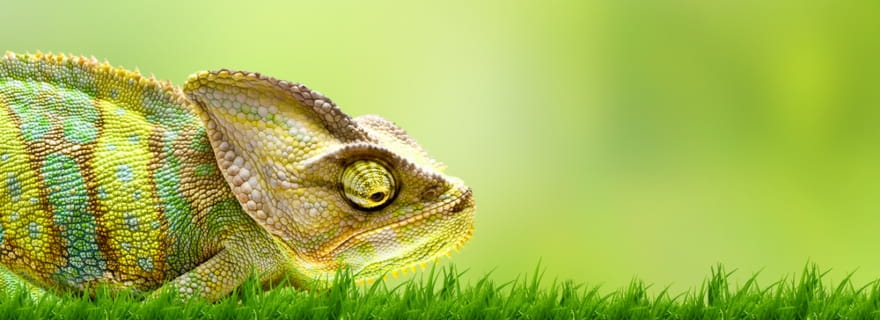 Seguro de mascotas para animales exóticos